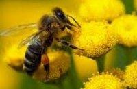 Пчелы напали на буддистских монахов