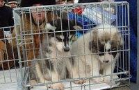 На «Птичьем рынке» в Киеве запретили торговать собаками и котами