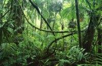 У джунглях Камбоджі знайшли мережу стародавніх міст, - ЗМІ