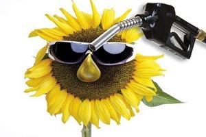 Greenpeace: биотопливо вреднее бензина