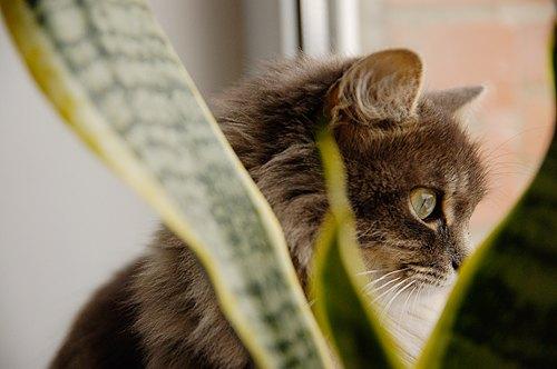 Кішка Мурка від Володимира з Вінниці