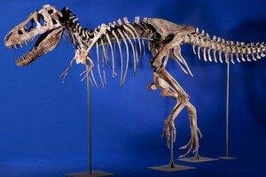 Монголия хочет вернуть скелет динозавра, проданый в США