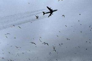 У Непалі через зіткнення з птахом розбився літак