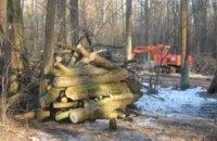 Улицы в раздерибаненном лесу под Киевом назвали в честь депутатов