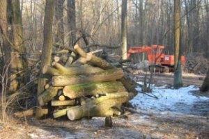 В Украине деревья поставят на электронный учет