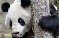 Пятничная панда #70