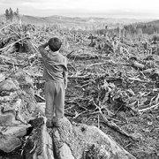 Централізоване знищення лісу