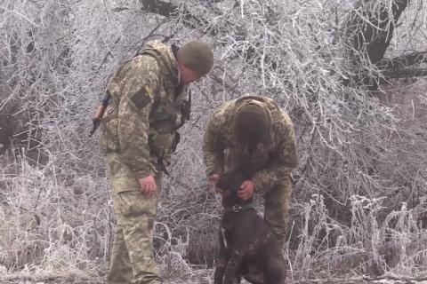 Військова лікарка п'ять годин оперувала пораненого фронтового собаку