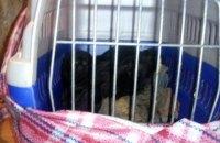 В Луганской области пограничники задержали ВАЗ с обезьянами