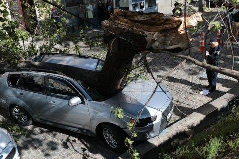 У центрі Львова дерево розчавило автомобіль депутата
