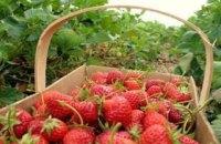 В Польше посетовали на нехватку работников из Украины для сбора урожая