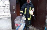 У Горішніх Плавнях пожежники винесли з палаючої квартири кролика, папугу і кота