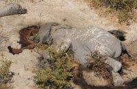 В Ботсване зафиксировали необъяснимый падеж сотен слонов