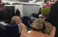 В Интерсити+ Киев-Львов неизвестные камнем разбили окно, у которого сидела Руслана