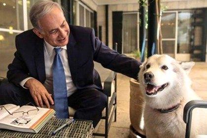 Собака премьер-министра Израиля покусала высокопоставленных гостей