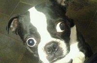В Книгу рекордов Гиннесса внесли пса с самыми большими глазами