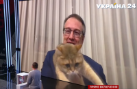 Кот Геращенко влез в кадр во время прямого включения