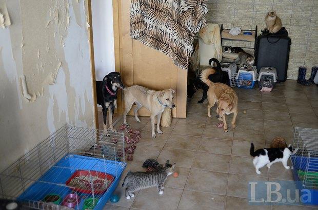 Так будет выглядеть ваша квартира, если вы заведете 60 котов. Впрочем, хватит и двадцати