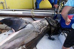 Белая акула запрыгнула в лодку к исследователям