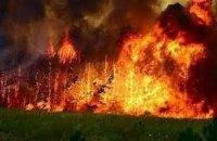Лісова пожежа знищила 8 покинутих домоволодінь у Київській області