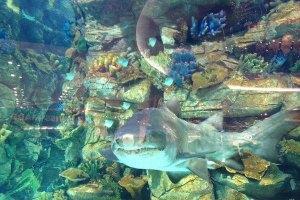 Еще одна акула в столичном торговом центре залегла на дно