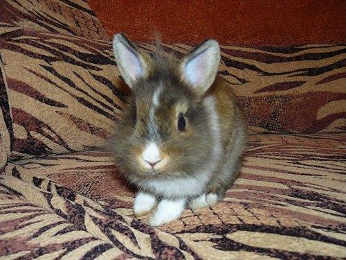 Цей милий кролик Няшка має доволі круту вдачу, за словами киянина Артема