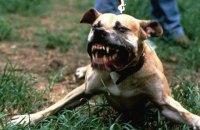 В Харьковской области собака загрызла 4-летнего ребенка
