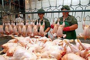 В ЕС отправились первые партии украинской курятины