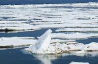 Берингово море осталось безо льда
