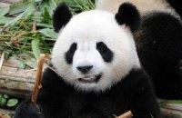 Пятничная панда #125