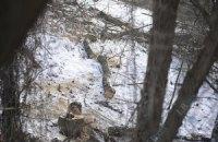 В Одесской области незаконно вырубили около 2 тыс. елок