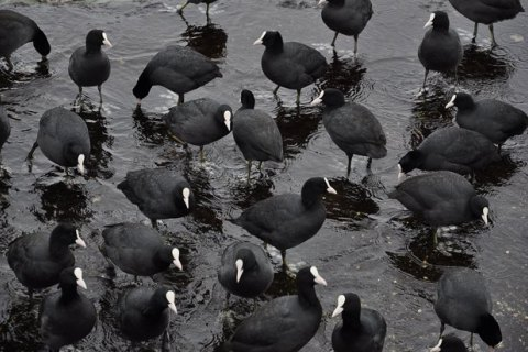 В Госпродпотребслужбе назвали причину гибели около 5 тыс. диких птиц