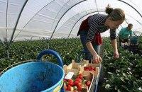 Близько дев'яти мільйонів українців працюють за кордоном
