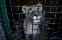 Бердянський зоопарк передав у заповідник ПАР п'ятьох левенят