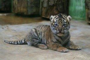 """""""Наш любимый зоопарк"""" продолжает сбор средств на вольер для кошачьих"""