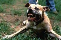 У Миколаєві в собаки, що покусав 5 людей, підтвердили сказ