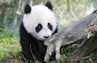 Пятничная панда #149