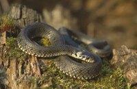 Від початку року змії покусали понад 20 українців