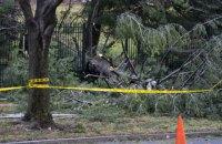 Во Львовской области поваленное ветром дерево убило мужчину