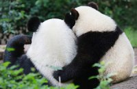 Пятничная панда #153