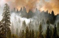 В Канаде из-за лесных пожаров эвакуируют 80-тысячный город
