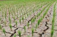 КНДР потерпає від найсильнішої за 100 років посухи
