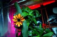 На МКС розпустилася квітка