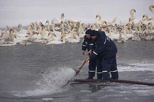 Ильичевский порт спас лебедей из ледового плена