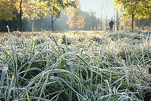 Синоптики прогнозируют заморозки