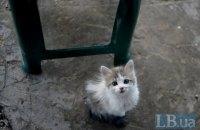В Одессе  арестовали мужчину, который издевался над котятами