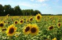 Днепропетровская область будет поставлять Беларуси гречиху, подсолнечник и горох