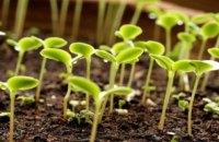 МінАПК виключило вплив похолодання на урожай зернових