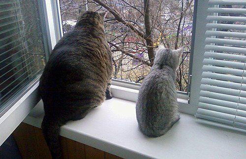 Котики от Наталии Белозер