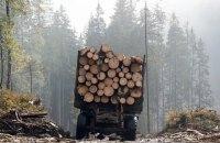 Чиновник Харьковского лесхоза предстанет перед судом за 4 млн грн убытков за незаконный сбыт леса